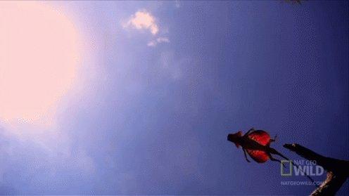 Flying Lizard GIF