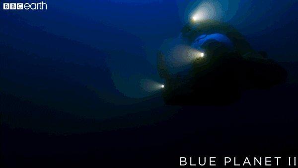 blue planet ocean GIF by BBC Earth