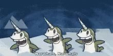 Narwhals GIF