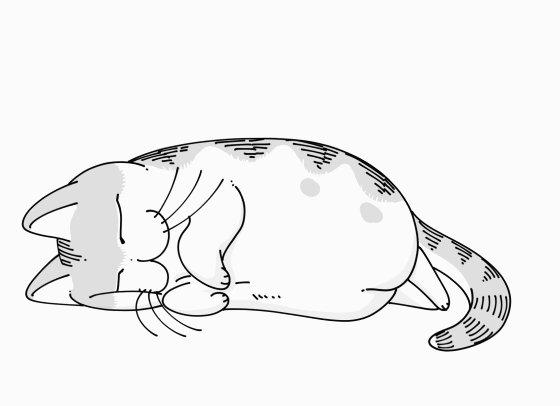 ゆったりするネコ