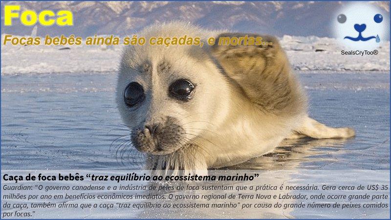 #Compartilhe #DêLIKE  #SealsCryToo® - Caça de Focas Bebês sealscry@gmail.com  Twitter @SealsCryToo  #bebês #Foca #FocasHarpa #Hunt #SealsCryToo #seal #harpseal #pup #natgeo #sealpup #puppies #furry #babyanimals #baby #wildlifephotography #arctic #adventure