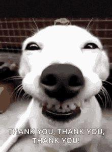 @Gambiste1 @VeryTraumatic Much appreciate appreciate your #RetweeetPlease @Gambiste1 #ThankYou my brother!  The #AMC $AMC #stonk #AMCTheatres #AMC $AMC #stonk  #SaveAMC #SaveAMC #SaveAMC