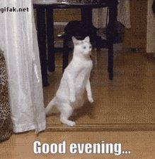 Dinner Cat GIF