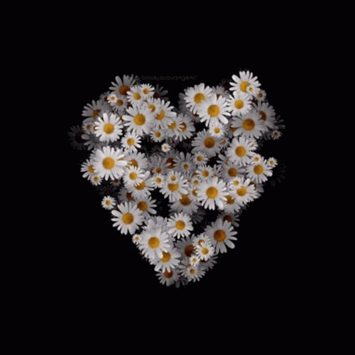 Her little fingers struggled to thread the #daisies. Tears welled as the stems split. It was to make Mummy feel better. By the time she had finished, clutching the disconnected strands, they told her, 'Not now.' Dry, straggly, unworn, she left her gift on the casket.  #vssnature