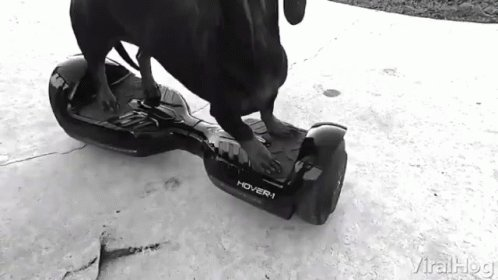 dog drive hoverboard    #SelfieOfTheYear #WednesdayMotivation #ProtectHinduGirl    #TomAndJerryMovie #RIPTwitter #Competition #Influencer #FridayFeelings #MondayMotivation #Saka #love #cute #dogs #beautiful #IndiaTogether