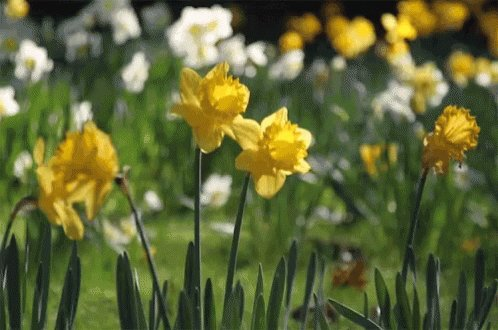 Image for the Tweet beginning: If Spring is giving you