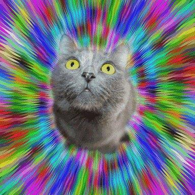 cat pet GIF by Psyklon