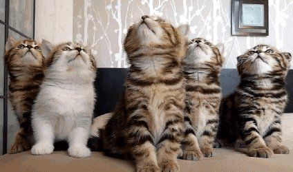Image for the Tweet beginning: #catteachers on first day of