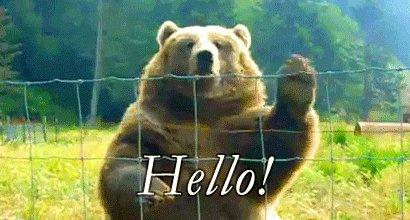 Bear Hello GIF