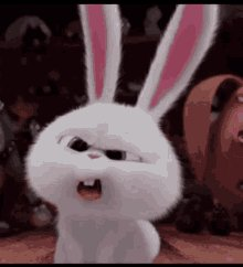 Bunnies What GIF
