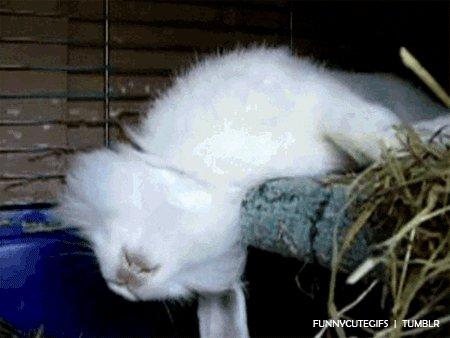 shocked rabbit GIF