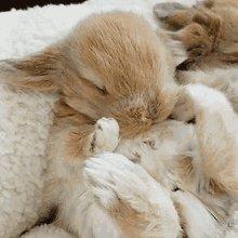 Bunny Rabbit GIF