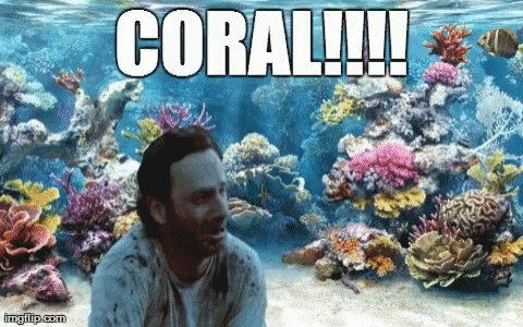 Coral GIF