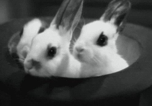 @KatiePhang's photo on Rabbit Rabbit