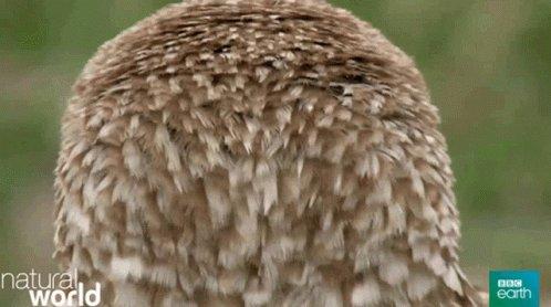 Animal Bird GIF