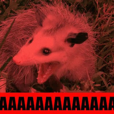A possum screaming