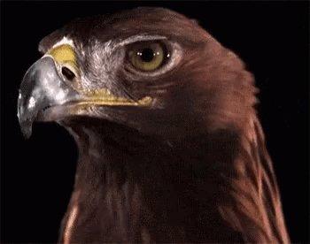 Seductive Bird GIF