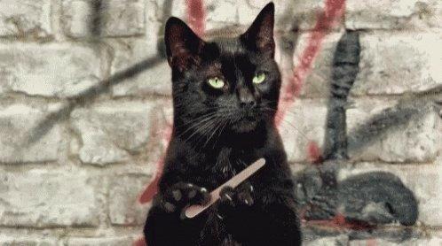 Tell Me More Salem GIF