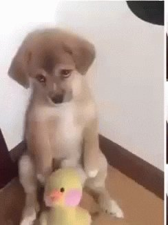 Sad Dog GIF by memecandy
