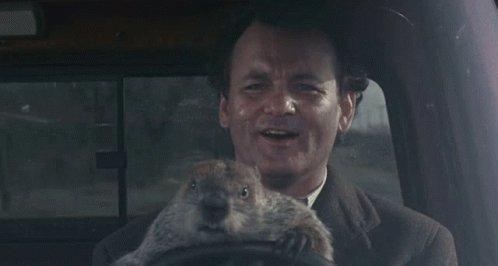 Groundhog Driving GIF