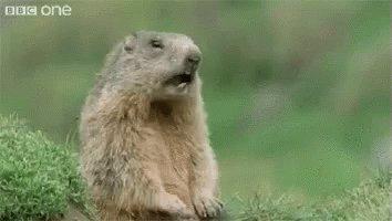 Hey Squirrel GIF