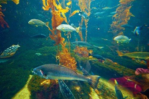 fish swim GIF