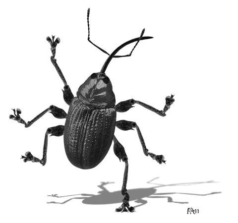 digital art cockroach GIF by Colin Raff