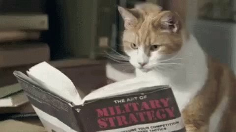 Cat Reading GIF