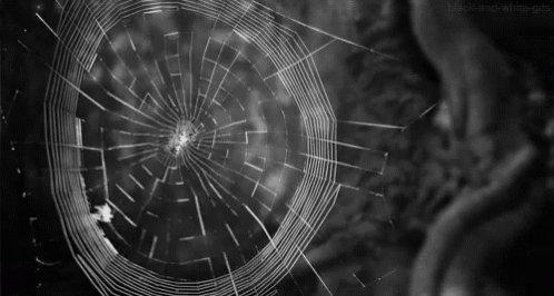 Spider Web GIF