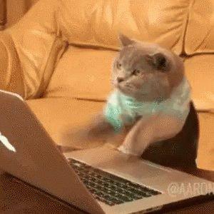 Cat Computer GIF