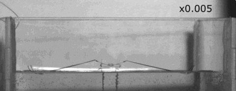 water robot GIF by Harvard University