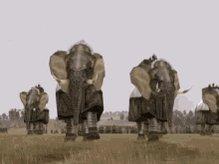 Armoured Elephants Rome Total War GIF