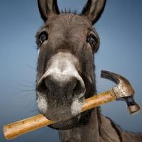 DonkeyHammer